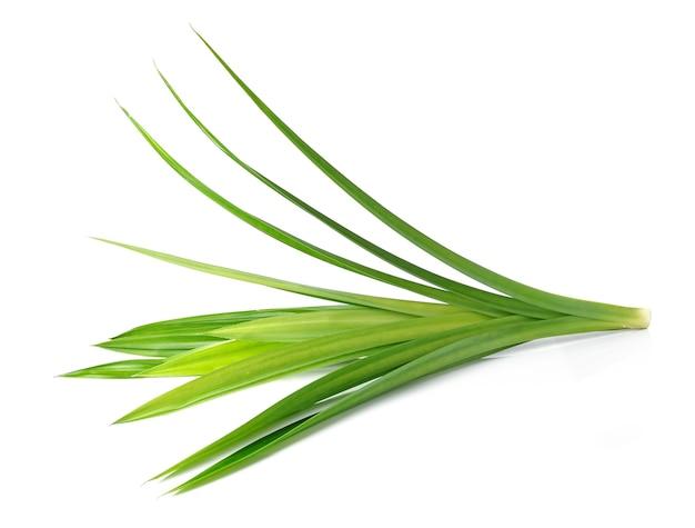 흰색 바탕에 신선한 판다 잎
