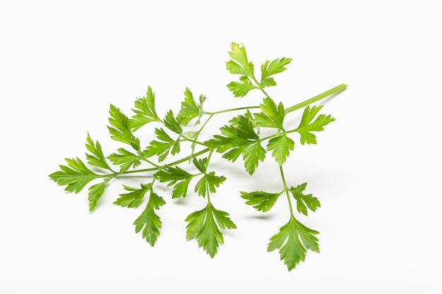 Fresh parsley isolated