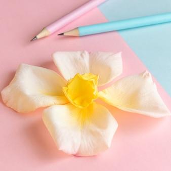 꽃과 연필 창조 창조적인 개념이 있는 신선한 파스텔 색상 배경