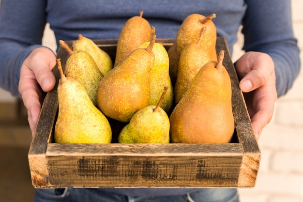 男性の手で新鮮な梨。ジューシーで風味豊かな洋ナシの箱、バスケット。