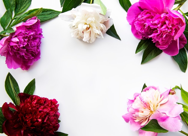 Fresh peony flowers frame with copy space on white background, flat lay.