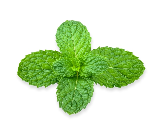 Fresh peppermint isolated on white background. mint clipping path