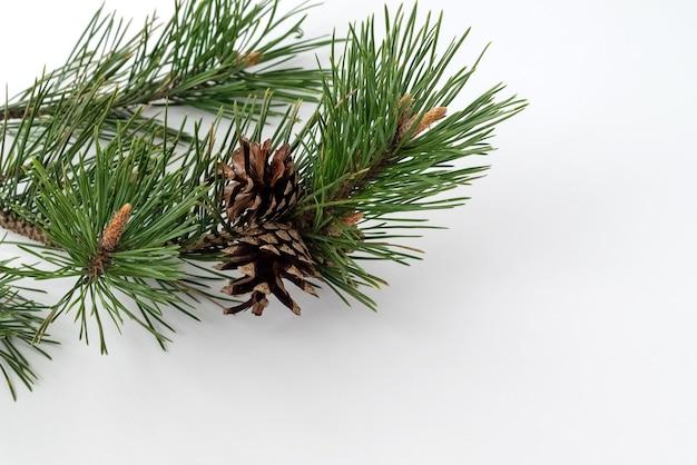 白い表面に長い緑の針と円錐形の新鮮な松の枝