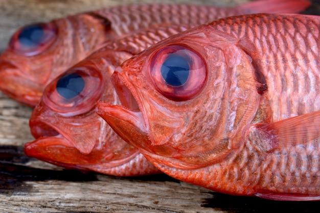 Fresh pinecone soldier fish.