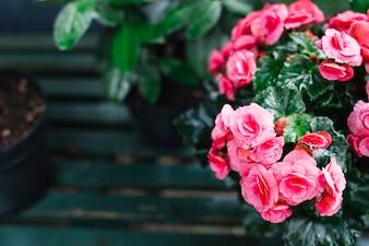 Fresh pink beautiful flower in bloom