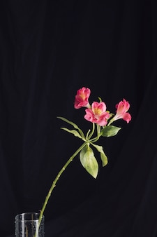 Свежие розовые цветы в вазе
