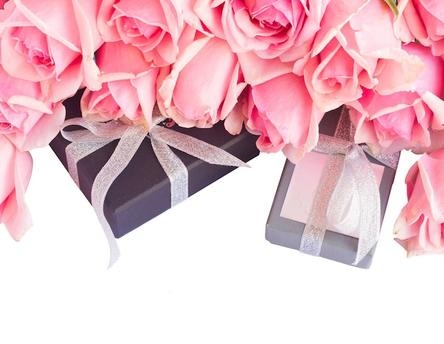 Fresh  pink garden roses with gift boxes  isolated on white background