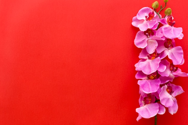 Fresh pink orchid flowers arranged on red backdrop