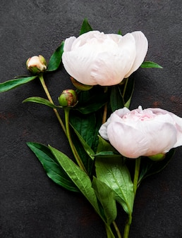 Fresh pink peony flowers border with copy space on black background flat lay
