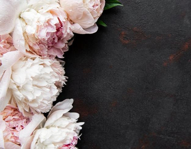 Fresh pink peony flowers border with copy space on black surface flat lay