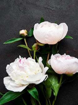 Fresh pink peony flowers border with copy space on black