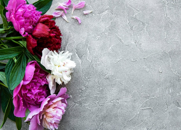Fresh pink peony flowers border with copy space on grey concrete  background, flat lay.