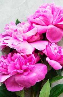 Fresh pink peony flowers border with copy space on grey concrete  background, flat lay