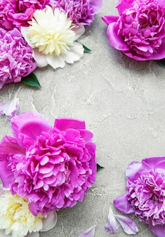 Fresh pink peony flowers border with copy space on grey concrete  surface, flat lay