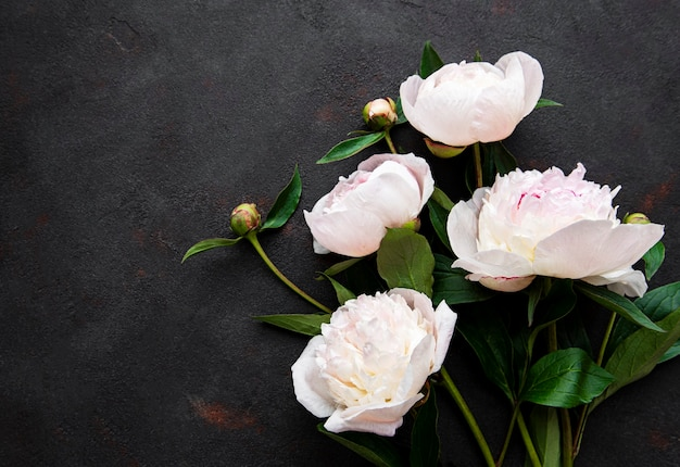 Свежие розовые цветы пиона граница с копией пространства на черном фоне, плоская планировка.