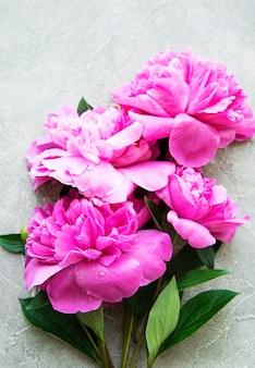 新鮮なピンクの牡丹の花は、灰色のコンクリートの背景、フラットレイのコピースペースと国境を接します。