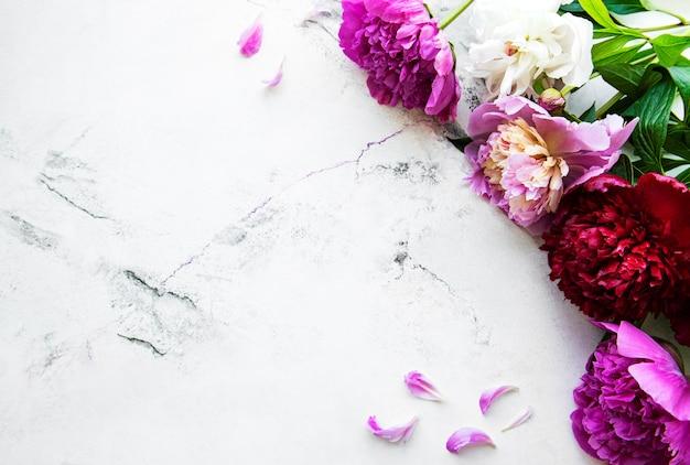 Свежие розовые цветы пиона граничат с копией пространства на белом мраморном фоне, плоская планировка.