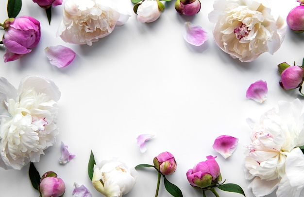 Fresh pink peony flowers border with copy space on white  background, flat lay.