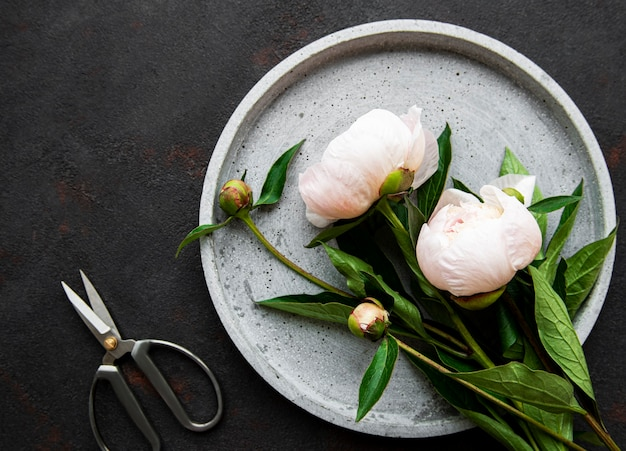 Fresh pink peony flowers on a concrete plate on black table, flat lay.