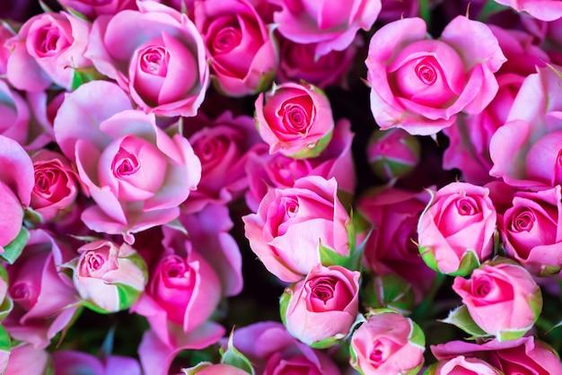 緑の葉と新鮮なピンクのバラ-自然春の日当たりの良い背景。ソフトフォーカスとボケ
