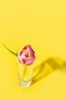 Fresh pink tulip in glass with shadow on yellow.