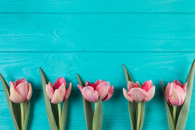 Fresh pink tulips on the turquoise wooden textured backdrop