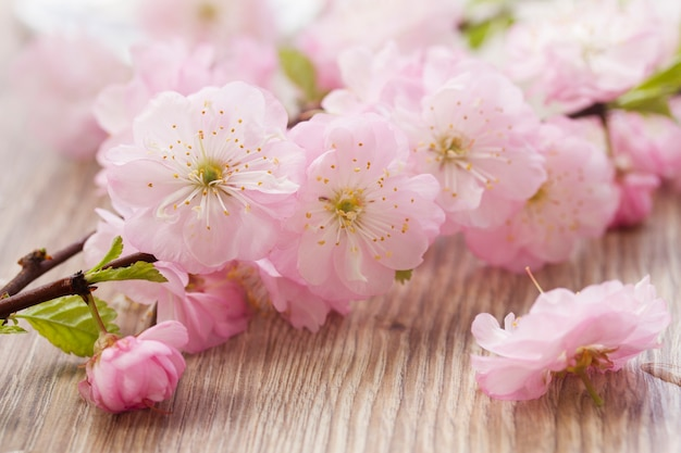 Fresh pink twigs with flowers on wooden table