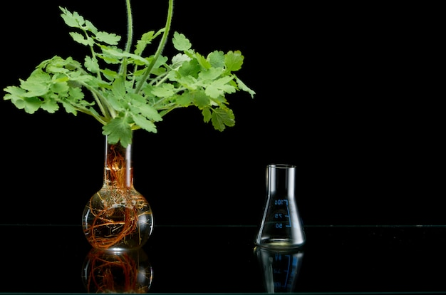 Fresh plant branches in medical flasks on black