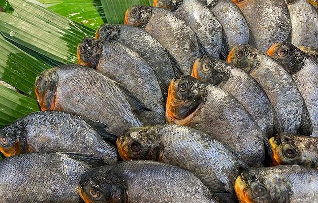 Свежая рыба помфрет в супермаркете