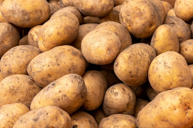Fresh potato with traces of earth on the skin. dirty raw potatoes in large quantity, not washed