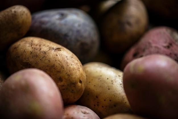 신선한 감자 뿌리 채소