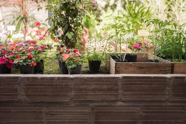 Fresh potted flower plants growing in garden