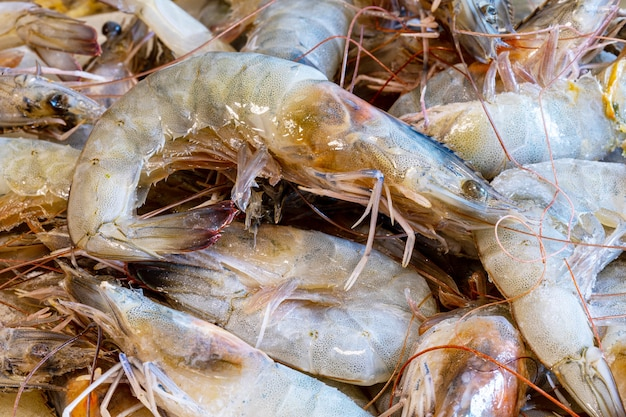 Fresh prawns over the sink to clean. shrimps background for background texture.