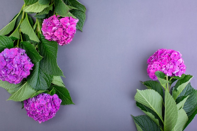 Свежие фиолетовые гортензии на серой поверхности