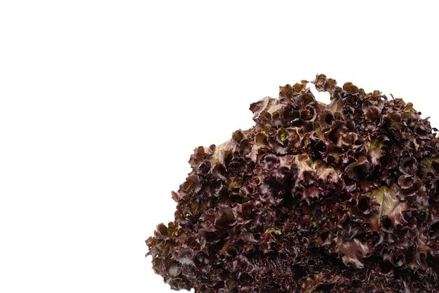 白い背景で隔離の新鮮な紫色のサラダ。上面図。