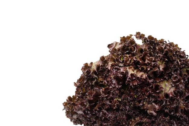 Fresh purple salad isolated on a white background. top view.