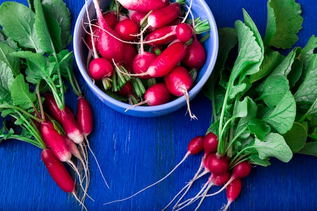 Fresh radish in blue bowl