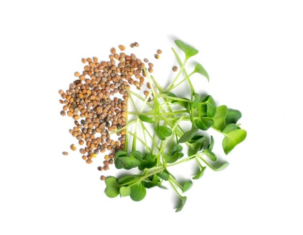 白い健康的なライフスタイルの概念で分離された新鮮な大根マイクログリーンと種子