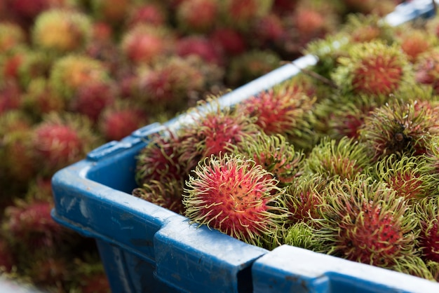 Fresh rambutan from the garden to market place