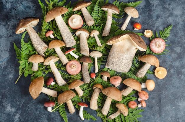 신선한 원시 식용 야생 boletus 버섯과 고사리에 russula는 어두운 표면에 나뭇잎. 평평한 평신도. 가을 버섯 따기.