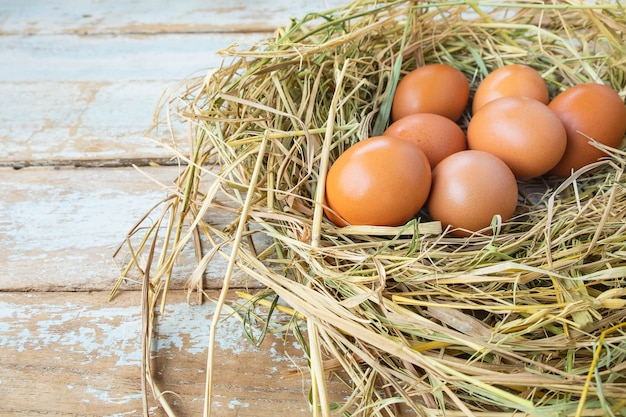 Fresh raw eggs from the farm