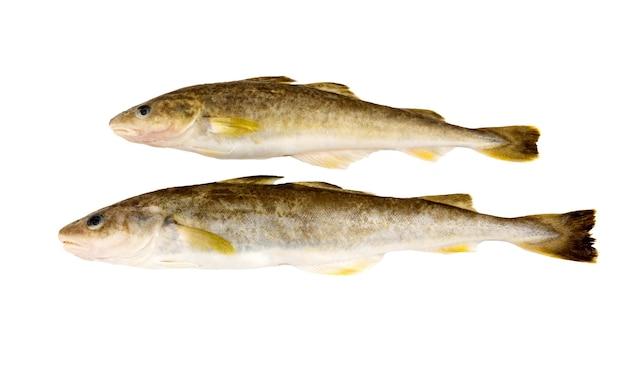 白い表面に分離された新鮮な生の魚