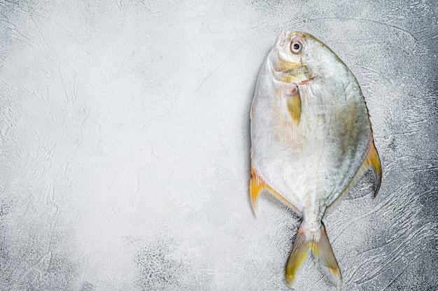 Помпано из свежей сырой рыбы на кухонном столе. белый фон. вид сверху. скопируйте пространство.