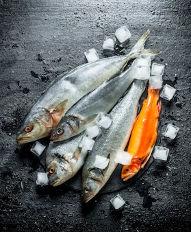 Fresh raw fish on a stone board with ice. on black rustic background