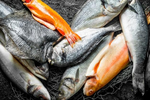 Fresh raw fish. top view