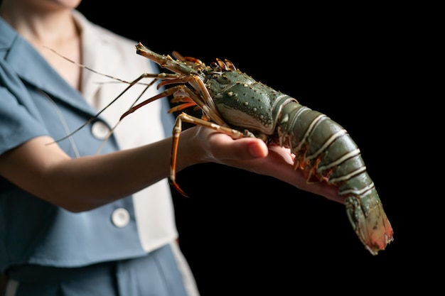 Fresh raw lobster in the woman hands spiny lobster