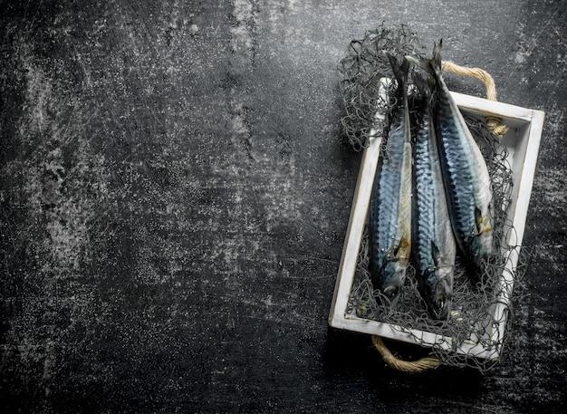 漁網のトレイに新鮮な生のサバ。暗い素朴なテーブルの上