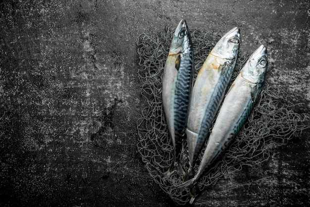 Свежая сырая скумбрия с рыболовной сетью. на темном деревенском
