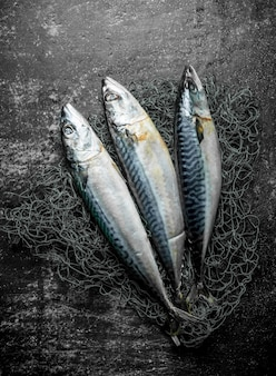 Fresh raw mackerel with fishing net.