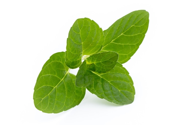 Fresh raw mint leaves isolated on white surface